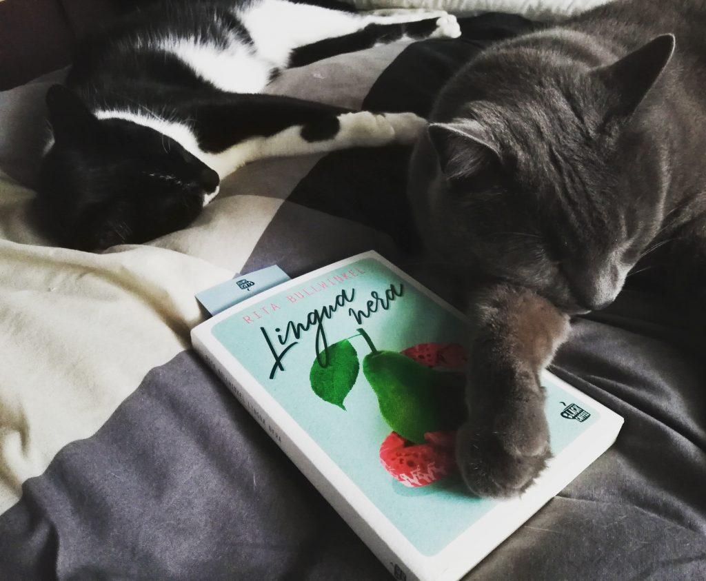 gatti e libri. Joyce e Luna, dormire fra i libri per il primo è un'abitudine e per la seconda è stata una scoperta interessante.